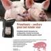 leaflet varkens NL
