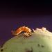 Macro-fotografie-appel-met-worm-2733
