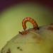 Macro-fotografie-appel-met-worm-2751