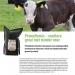 leaflet kalveren NL